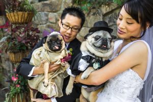 Wine and Roses Wedding in Lodi, California - Bride and Groom with their Pugs